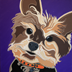 Oliver the Yorkshire Terrier Dog Portrait